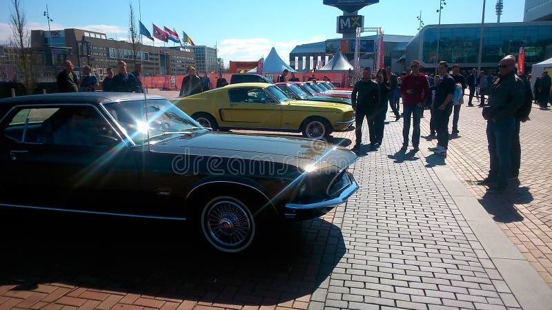 Mustangi w Amsterdam zdjęcie stock