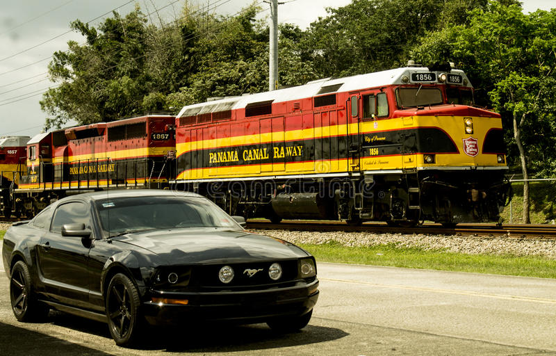 Mustango en Panamá imagen de archivo