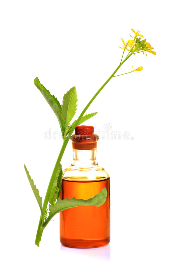 Mustard plant and oil stock images