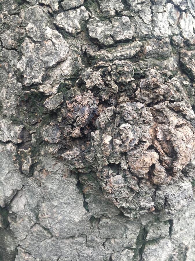 Muster der Baumrinde stockfotografie