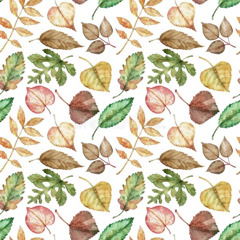 Muster der bunten Herbstblätter - rot, gelb, grün, orange, braun auf weißem Hintergrund stock abbildung