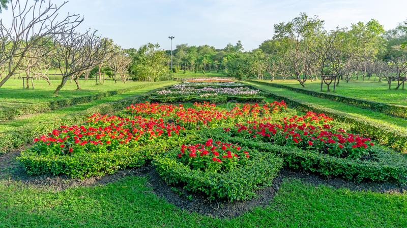 Muster der englischen Art des formalen Gartens, des roten Madagaskar-Singrüns und bunten der blühenden Pflanze, die in einem grün stockbilder