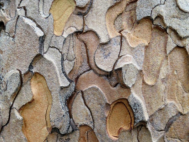 Muster in der Ponderosa-Kiefern-Barke lizenzfreie stockbilder