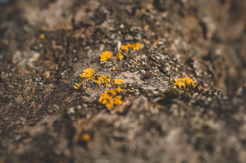 Muster des Flechtenmooses und -pilzes, die auf einer Barke eines Baums im Wald wachsen stockfotos