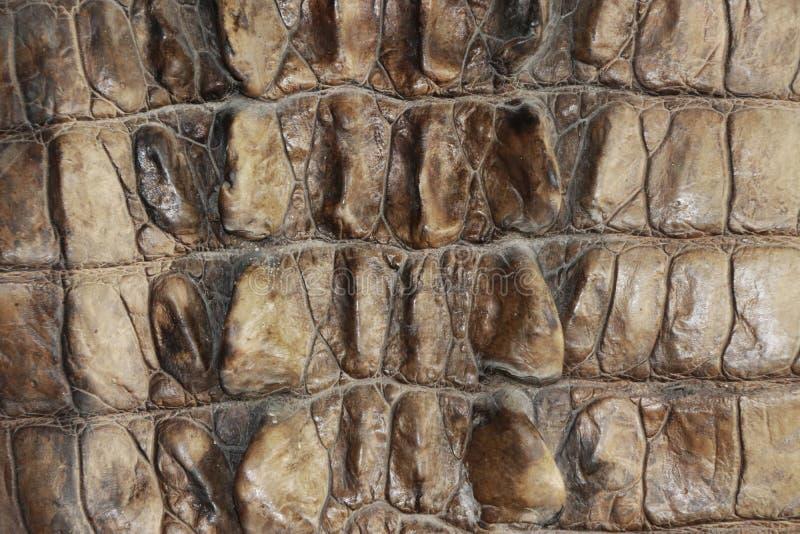 Muster des Krokodilleders in der braunen Farbe stockbilder