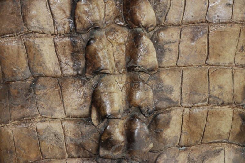 Muster des Krokodilleders in der braunen Farbe lizenzfreie stockfotos
