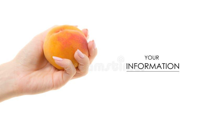 Muster des Pfirsiches in der Hand stockfotos