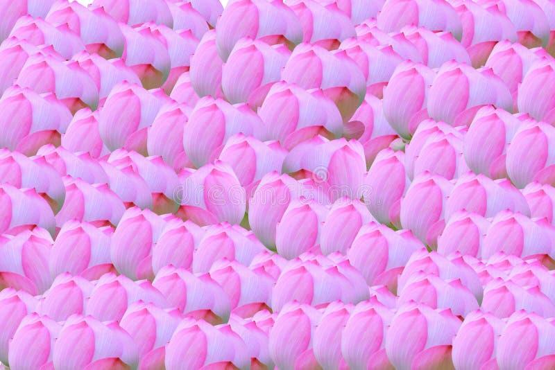 Muster-Lotus-fiower für Hintergrund lizenzfreie stockbilder
