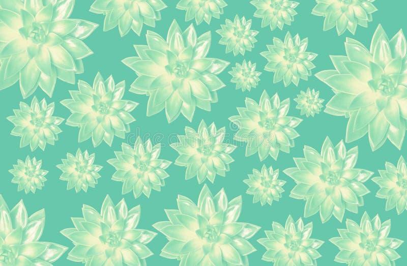 Muster von Succulents lizenzfreie stockfotos
