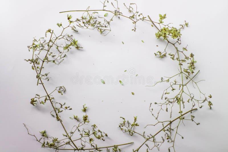 Musterbeschaffenheit mit grünen trockenen Blättern hüpfen auf weißem Hintergrund Flache Lage, minimales Konzept der Draufsicht lizenzfreie stockfotos