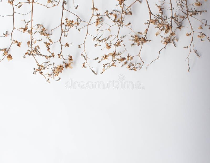 Musterbeschaffenheit mit grünen trockenen Blättern hüpfen auf weißem Hintergrund Flache Lage, minimales Konzept der Draufsicht lizenzfreies stockbild