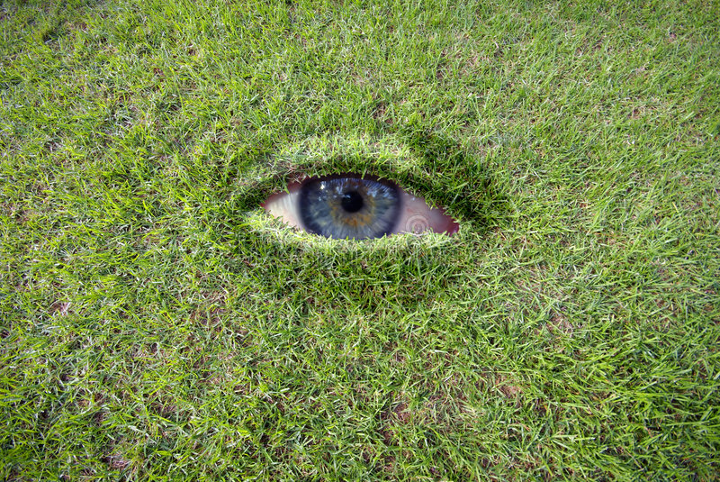 Mustern Sie im Gras stockfotografie