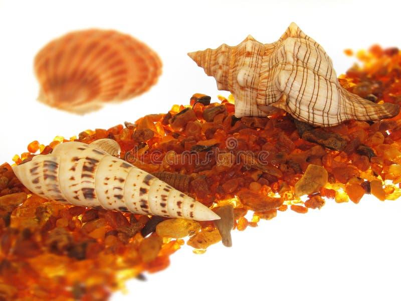 Download Muszle morskie obraz stock. Obraz złożonej z seashell, czesak - 138517