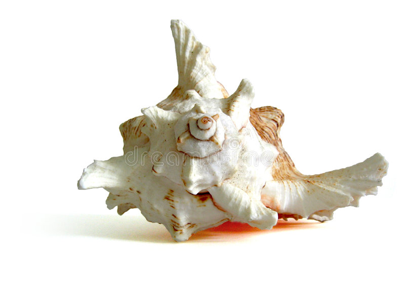 muszle morskie zdjęcia royalty free