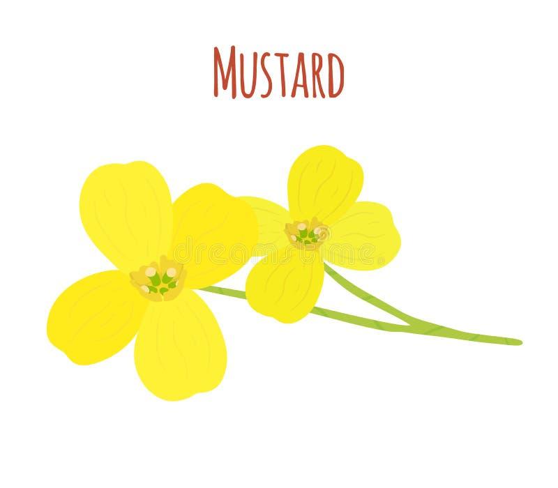 Musztarda kwiat Organicznie condiment Kreskówki mieszkania styl również zwrócić corel ilustracji wektora royalty ilustracja