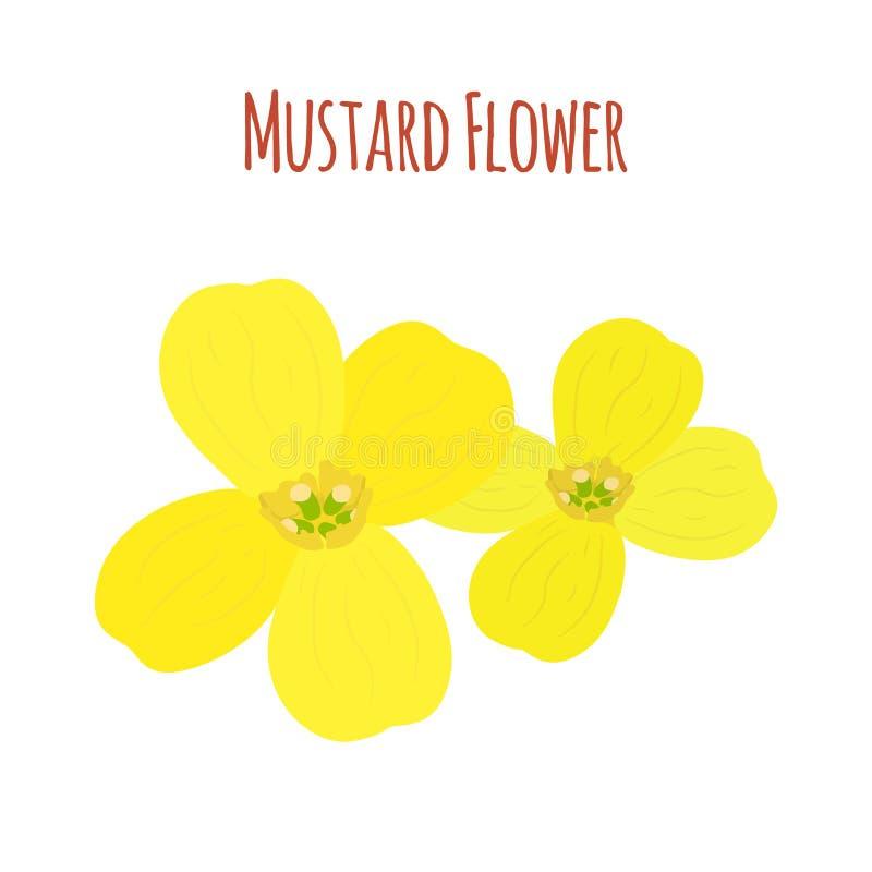 Musztarda kwiat Organicznie condiment Kreskówki mieszkania styl również zwrócić corel ilustracji wektora ilustracji