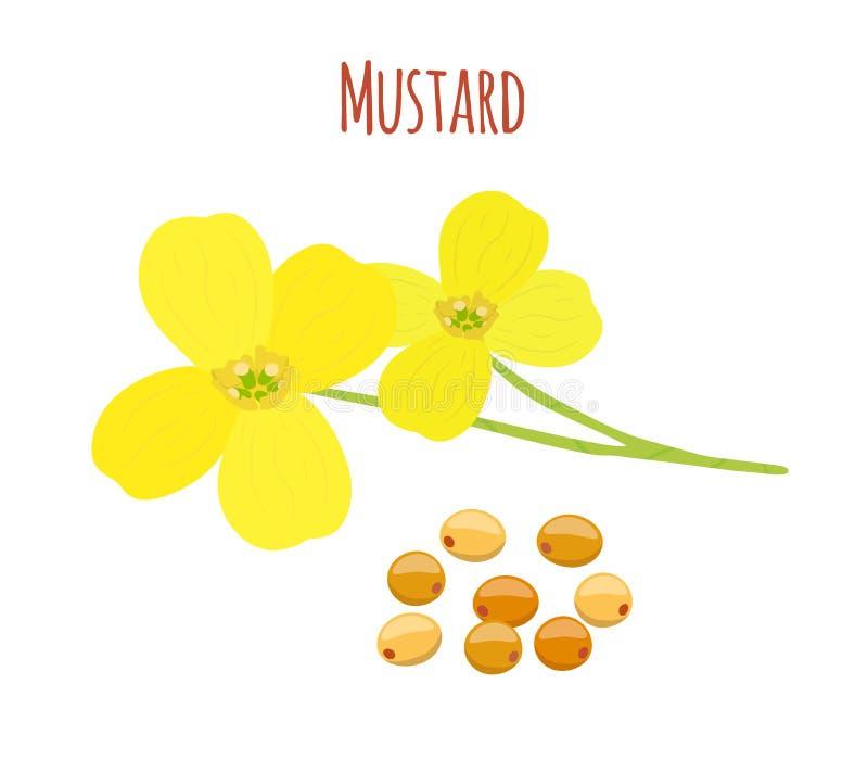 Musztarda kwiat, ziarna Organicznie condiment Kreskówki mieszkania styl również zwrócić corel ilustracji wektora royalty ilustracja
