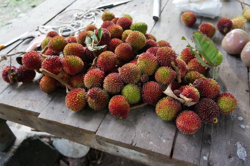 Mutabile Blume för Pulasan Nephelium tropisk exotisk frukt fotografering för bildbyråer