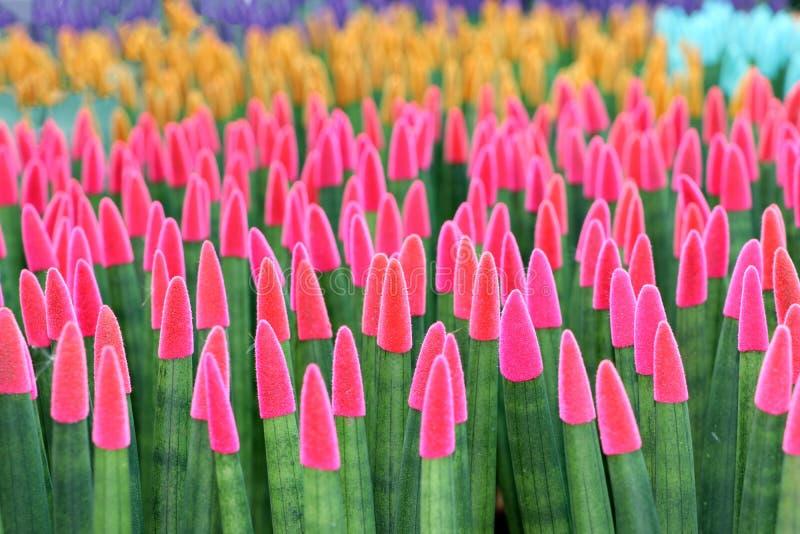 Mutiges attraktives Blumenmuster einer Reihe des Rosas und der gr?nen Blumen lizenzfreie stockfotos