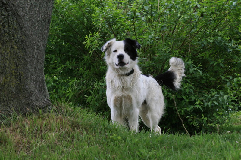 Download Mutt stock photo. Image of spot, spots, barking, black - 5211362