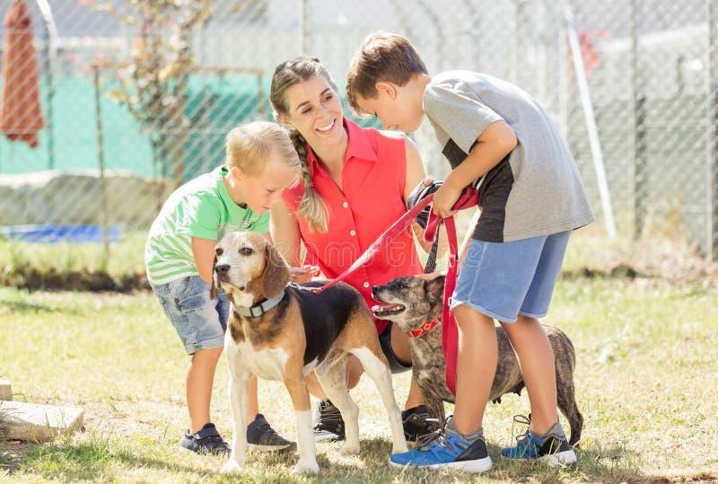 Mutter mit ihren gehenden Hunden der Söhne eines Tierheims stockbilder