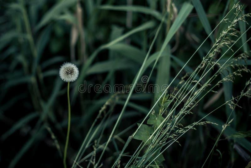 Mutter Natur ist der beste Künstler lizenzfreie stockfotos