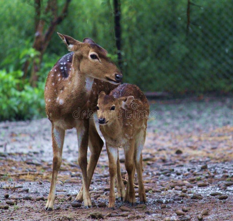 Mutter ` s Liebe in Richtung zu ihr lizenzfreie stockfotos