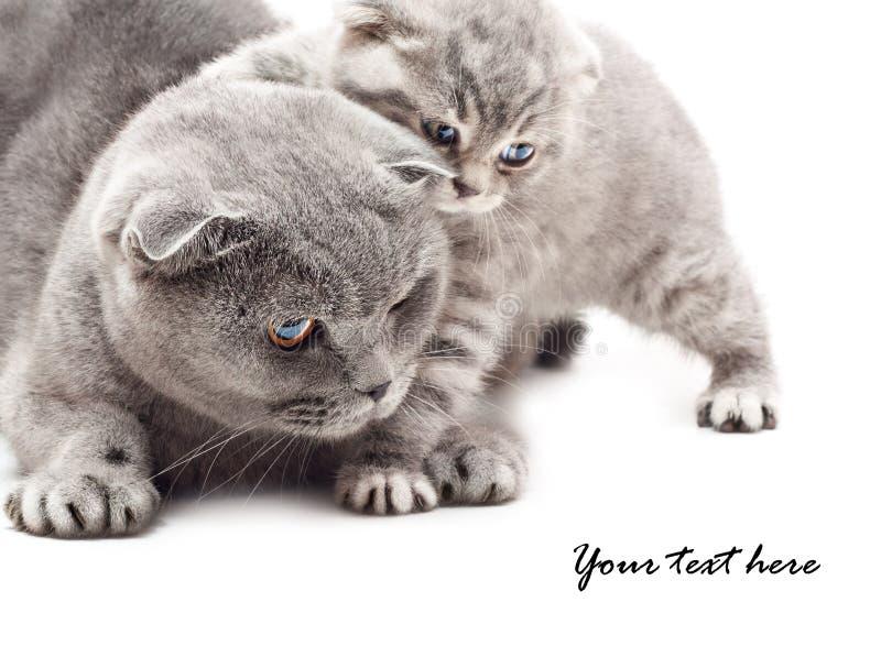 Mutter und ihr Kätzchen lizenzfreie stockfotos