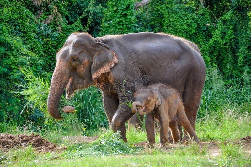 Mutter- und Schätzchenelefant lizenzfreies stockfoto