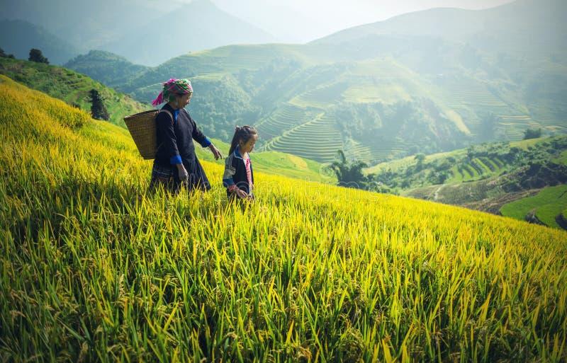 Mutter und Tochter im Reisreisfeld lizenzfreies stockbild