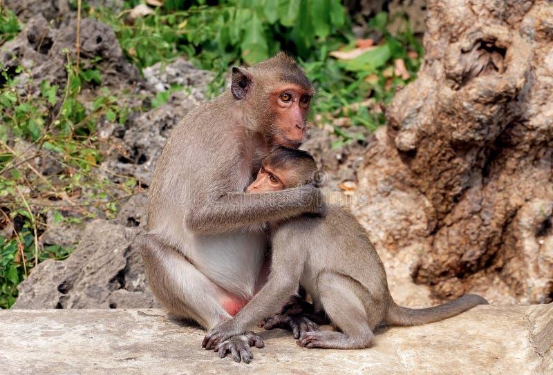Mutteraffe, der ihren Babyaffen umarmt lizenzfreie stockfotografie