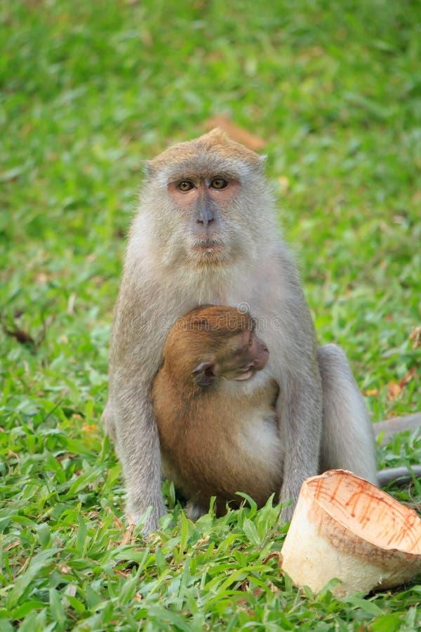 Mutteraffe, der Sohnsitzen umarmt lizenzfreies stockfoto