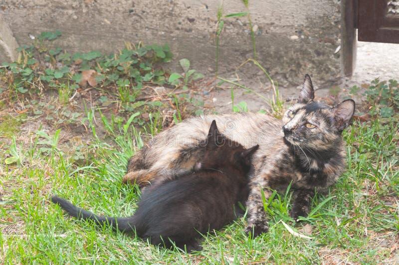 Mutterkatze, die kleine Miezekatze im Garten einzieht lizenzfreie stockfotografie