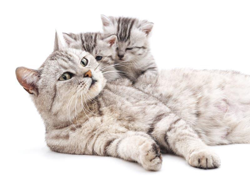 Mutterkatze mit Kätzchen lizenzfreie stockbilder