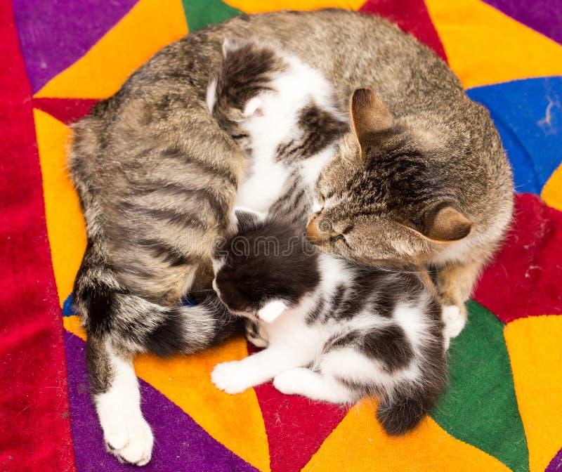Mutterkatze mit kleinen Kätzchen lizenzfreie stockfotos