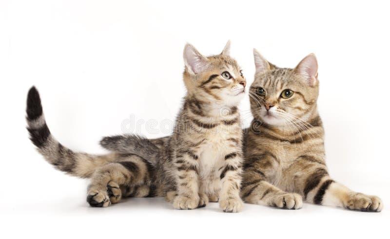 Mutterkatze und das kleine Kätzchen stockbilder