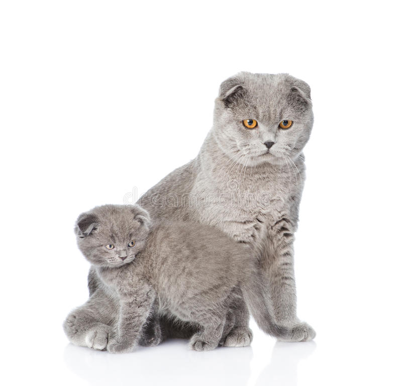 Mutterkatze und kleines Kätzchen, die zusammen sitzen Auf Weiß stockbild