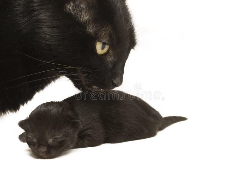 Mutterkatze und Schätzchen-Kätzchen stockfotografie