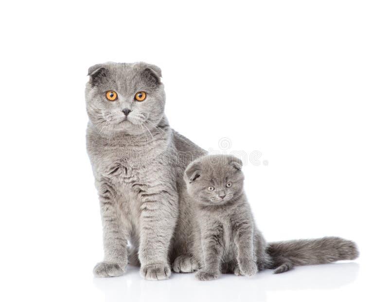 Mutterkatze wenig und Kätzchen, das zusammen sitzt Lokalisiert auf Weiß stockbild