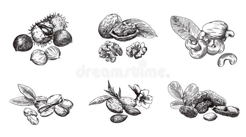 Mutteruppsättning royaltyfri illustrationer