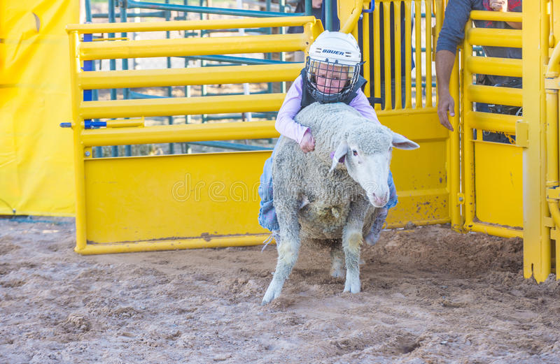 Mutton Busting stock photo