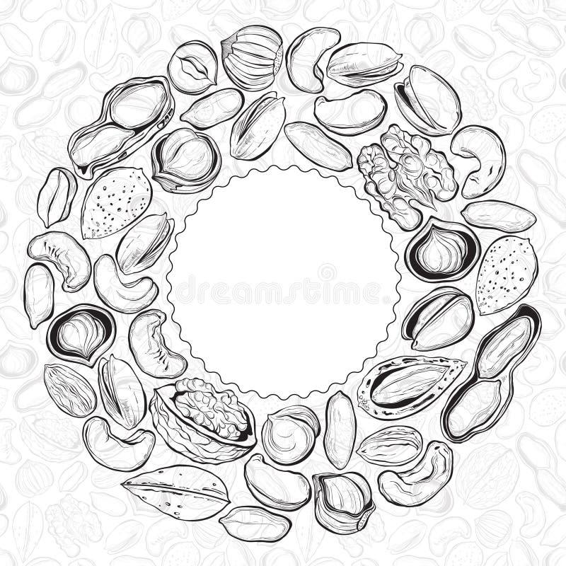 muttrar för close för cederträ för mandelbakgrundscashew sörjer upp Matillustration med hasselnötter, valnöt royaltyfri illustrationer
