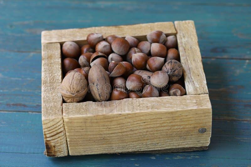 Muttrar och pecannötter royaltyfri foto
