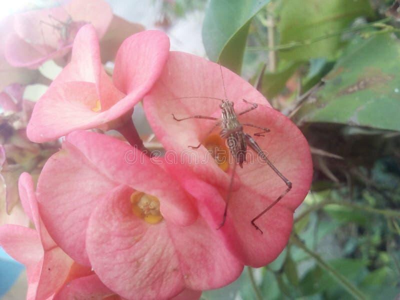 Mutualism dos insetos e das plantas fotos de stock