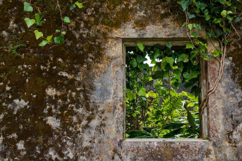 Muur en venster van een verlaten huis stock foto's