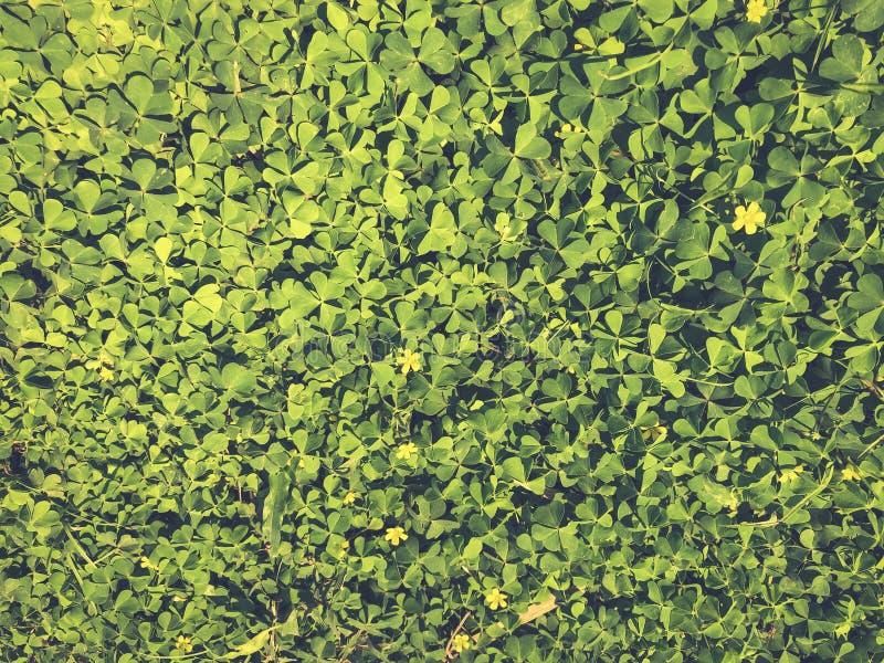 Muur groene bladeren stock illustratie
