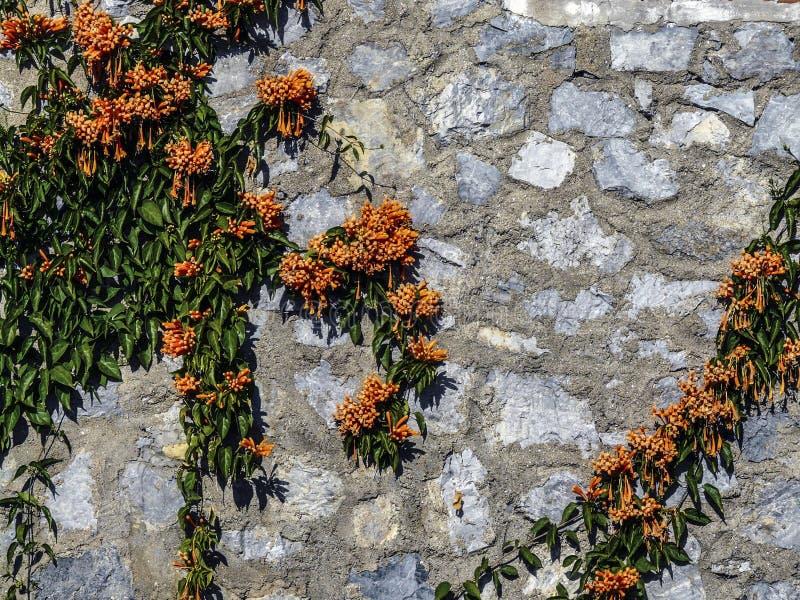 Muur met bloemen royalty-vrije stock afbeeldingen