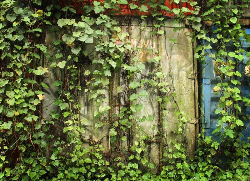 muur met groene bladeren stock foto's