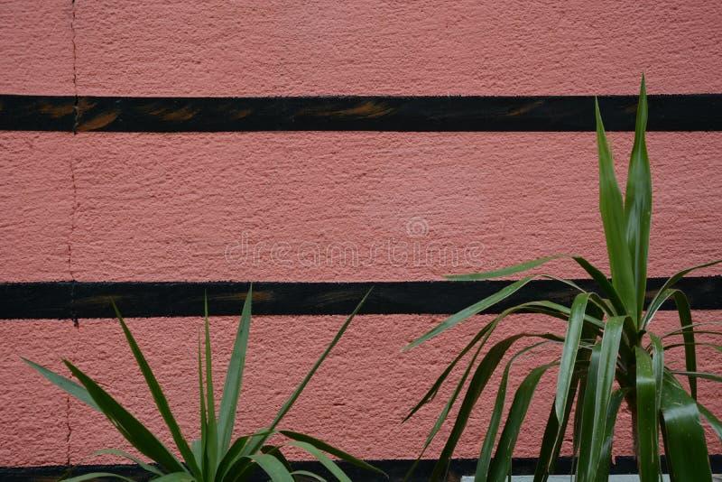 muur met groene bladeren stock fotografie