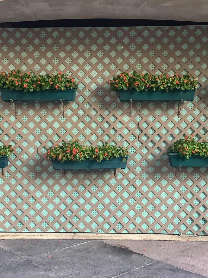 Muur met van de roosterpatroon en bloem hangende dozen stock afbeelding